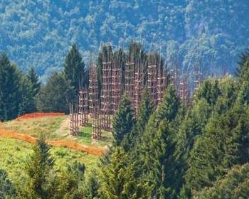 Nasce la prima Cattedrale Vegetale