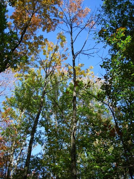 L'importanza della valutazione del ciclo di vita del legno di latifoglia americano