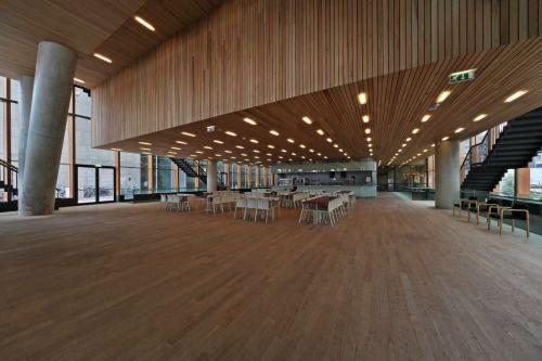 La quercia rossa scalda l'atmosfera della  nuova Scuola di musica di Amsterdam