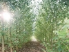 piantagioni_dettaglio