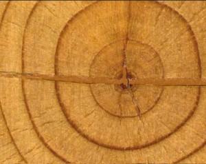 Sfatare i luoghi comuni sul legno