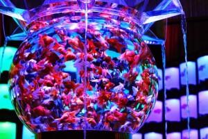Art Aquarium a Milano per Expo 2015. Un successo importante 1