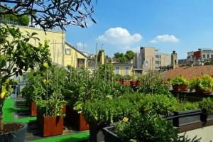 La filosofia green dell'Hotel: l'orto in terrazza