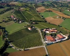 Nuova sede della azienda vitivinicola Umberto Cesari 4