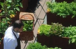 """Erbe aromatiche, fiori, frutta e verdura di stagione a """"passo 0"""", utilizzate direttamente dalla cucina dell'Hotel"""