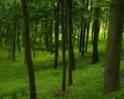 Affrontare i cambiamenti climatici con il legno 1
