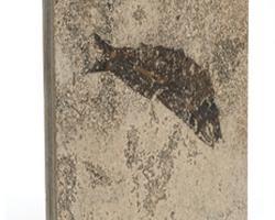 Pietre con fossili 1