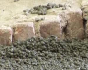 L'argilla espansa nel restauro 1