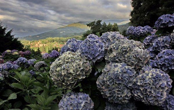 Il parco Burcina in Piemonte, foto di Cerutti.