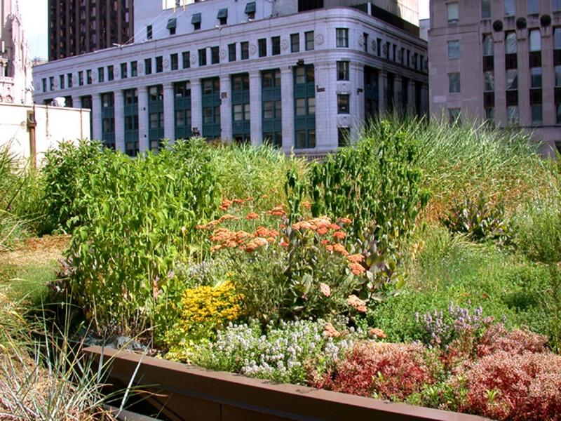 Il tetto verde della Chicago City Hall