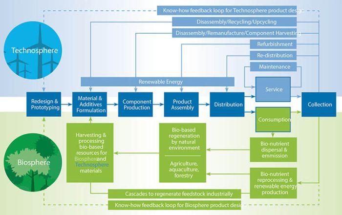 Illustrazione dei flussi di materiale nell'economia circolare Cradle to Cradle