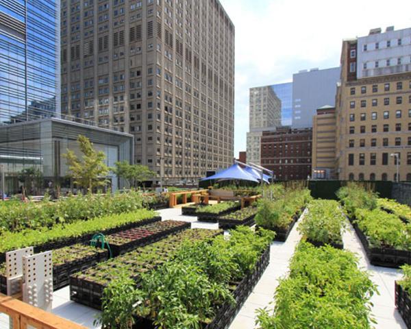 """Orto urbano: vivere """"verde"""" in città"""