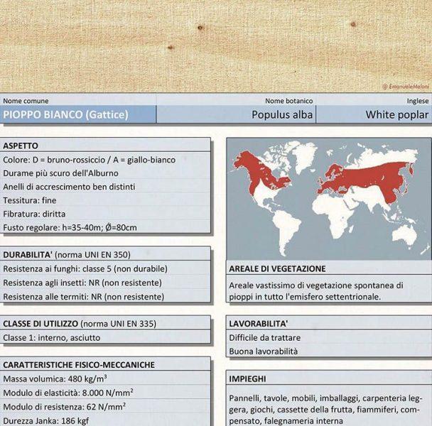 Caratteristiche del pioppo, legno utilizzato in edilizia