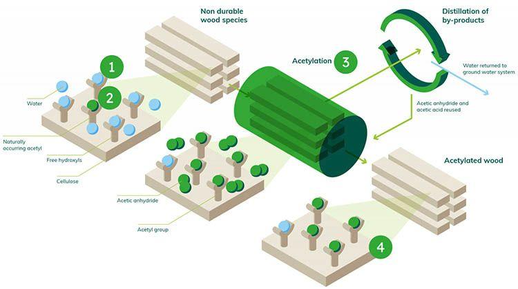 Accoya: il processo dell'acetilazione