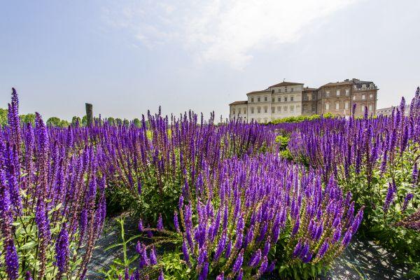Reggia di Venaria finalista de Il Parco più Bello 2019
