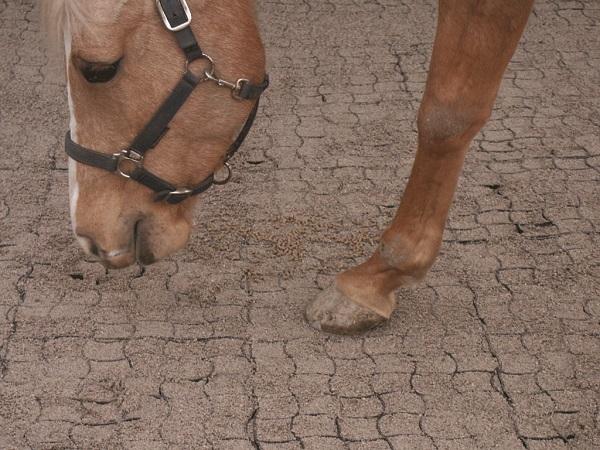 Runfloor cavalli per il consolidamento di fondi equestri