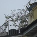 Diamo una sistemata al balcone