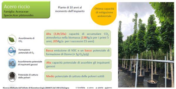 Piantumazione alberi nel cantiere green a Magnago che assorbono CO2