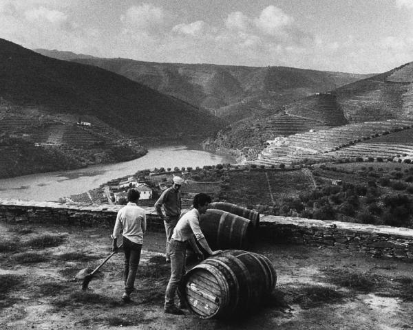 Studio per una cantina per viaggiatori nella diga incompiuta Foz Côa, Portogallo