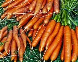 Fibre di ortaggi per un calcestruzzo più sicuro e sostenibile