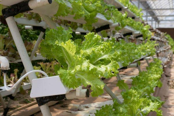 Coltivazione idroponica, aeroponica, acquaponica per gli orti del futuro