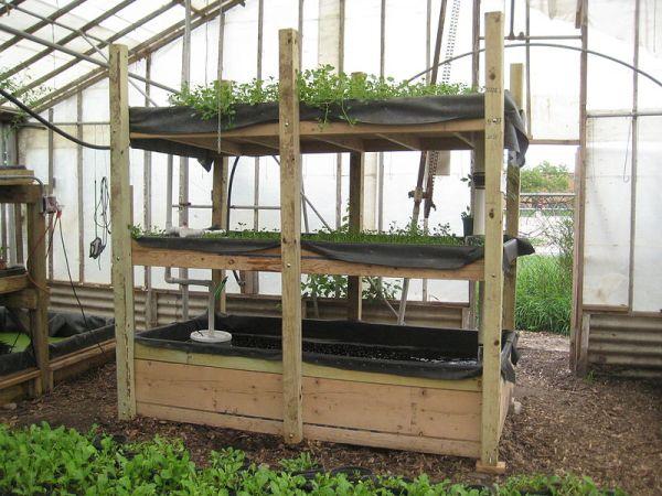 Coltura acquaponica per gli orti del futuro