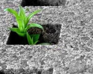 Disegno di Legge sul consumo del suolo 1