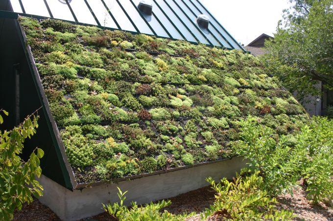 Vantaggi e benefici dei green roof