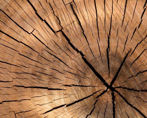 Degrado dei materiali: come intervenire sul legno