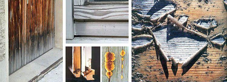 I meccanismi di modifica e degrado del legno