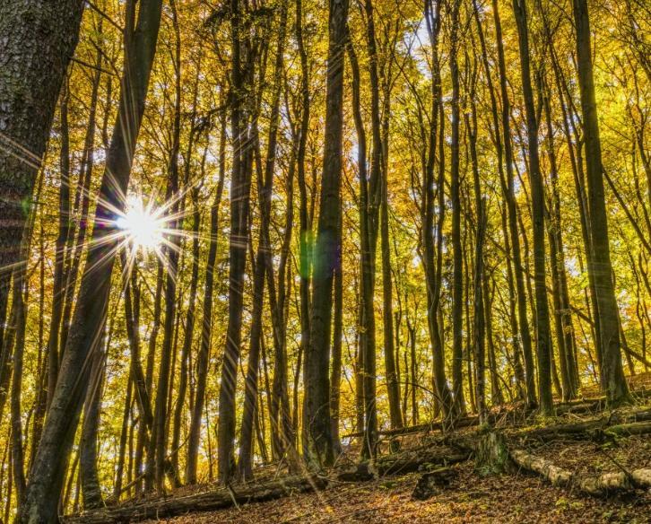 Le biomasse per il cambiamento climatico