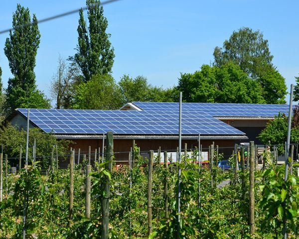 Fotovoltaico in agricoltura: perché oggi è il momento giusto
