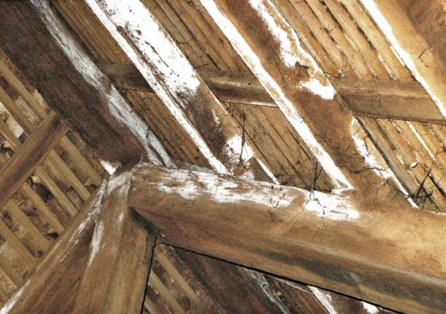 I nemici del legno: funghi, carie bianca