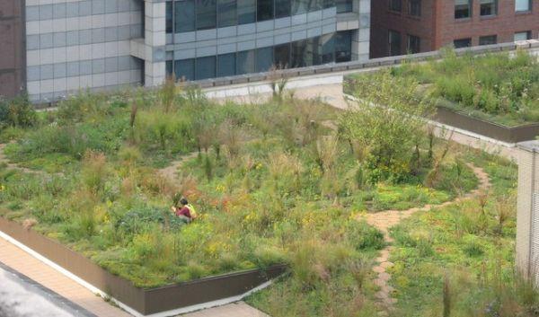 Come realizzare un tetto verde