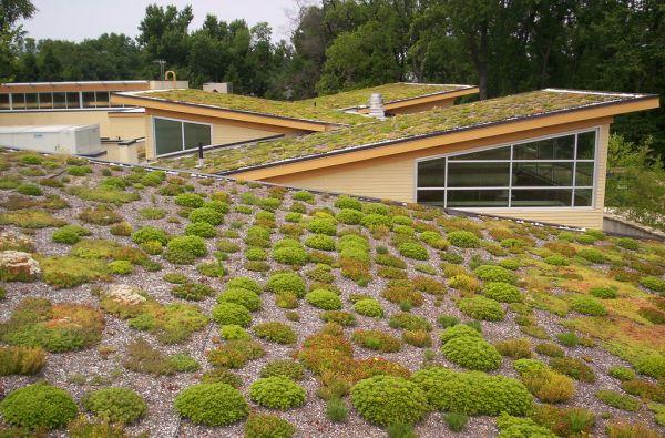 Il tetto verde può essere di tipo estensivo o intensivo