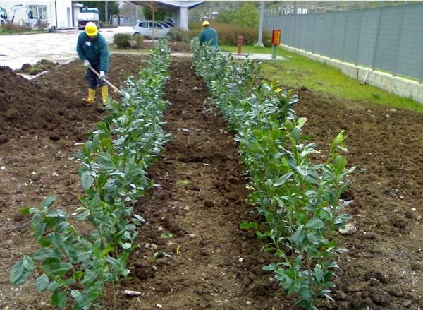 impianto di subirrigazione e fitodepurazione per piccole comunità