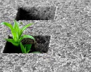 Rapporto ISPRA contro la cementificazione 1