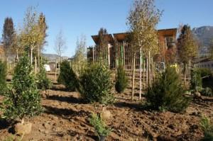 Agrileca per un intervento di recupero urbano a Trento 2