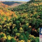 Gestione forestale sostenibile. L'esempio virtuoso del legno di latifoglia americana