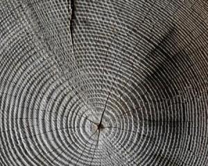 Acimall: trend positivo per le tecnologie della lavorazione del legno