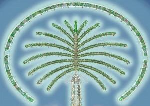 The Palm – l'ottava meraviglia del mondo