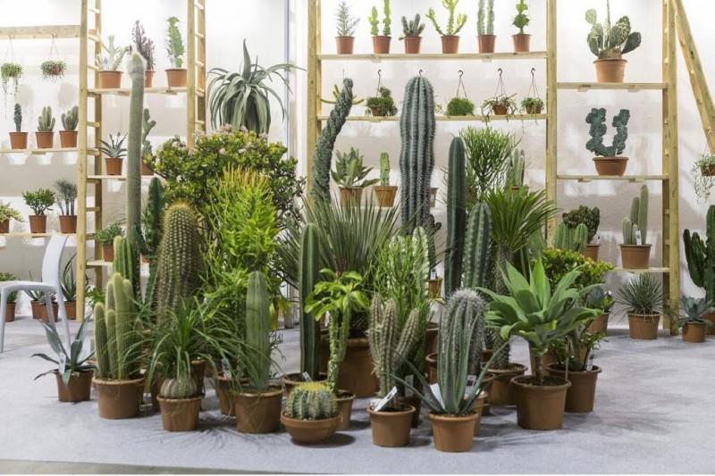 Cactacee in esposizione a Myplant & Garden 2019