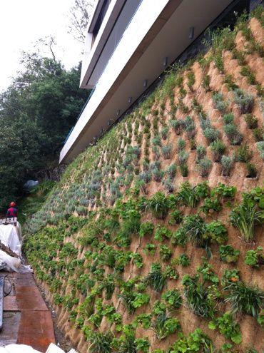 parete inverdita