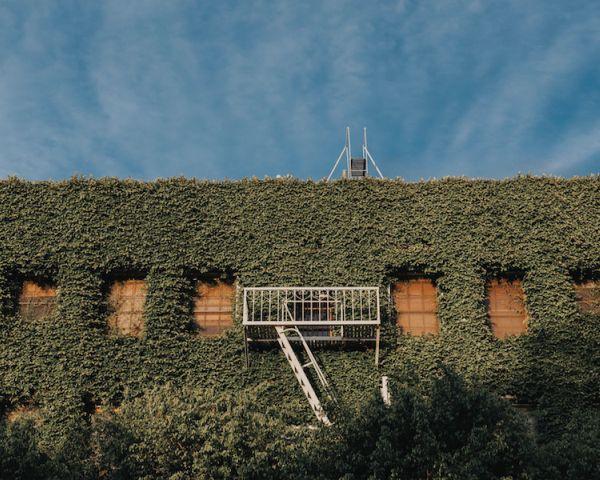 Pareti verdi per fare efficienza energetica e sostenibilità