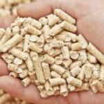 Biomasse per l'energia del futuro