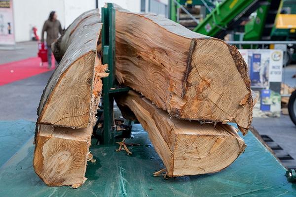 Progetto Bosco comunica il valore del legno per la sostenibilità e lo sviluppo economico