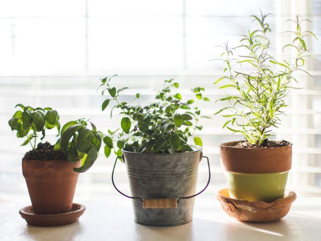 smart-working, i benefici della vegetazione in casa