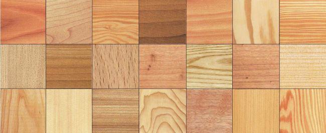 Specie legnose usate in edilizia. Guida alla scelta del legname da costruzione adatto