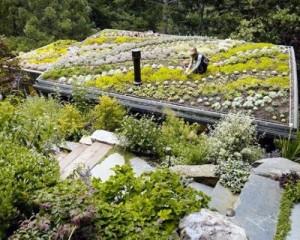 Tetti verdi: i progetti sostenibili più belli