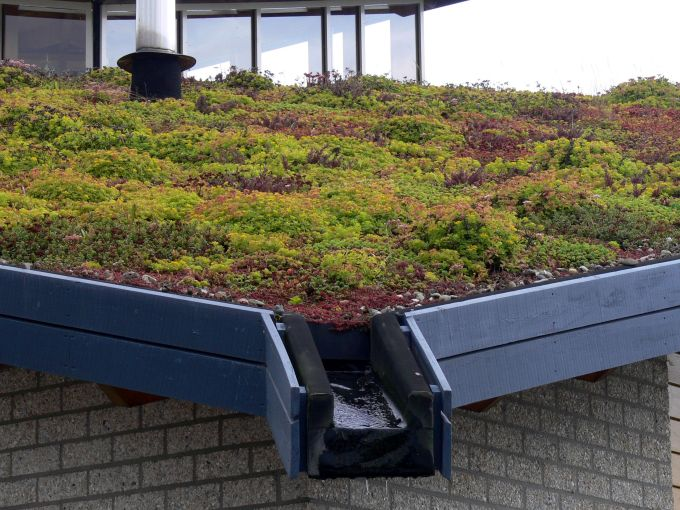 Piante per tetti verdi